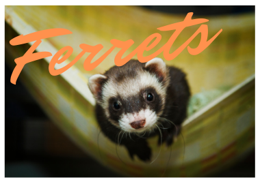 Ferret and Small Animal Food from PetFoodEtc.com